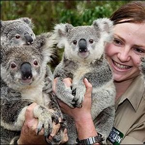 Currumbin Wildlife Sanctuary is set on 70 acres of native bushland and rainforest with hundreds of native Australian animals and bird life on display.