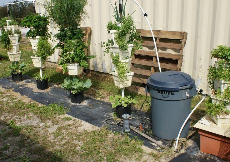 43 Best Images About Backyard Urban Vegetable Garden Ideas 400 x 300