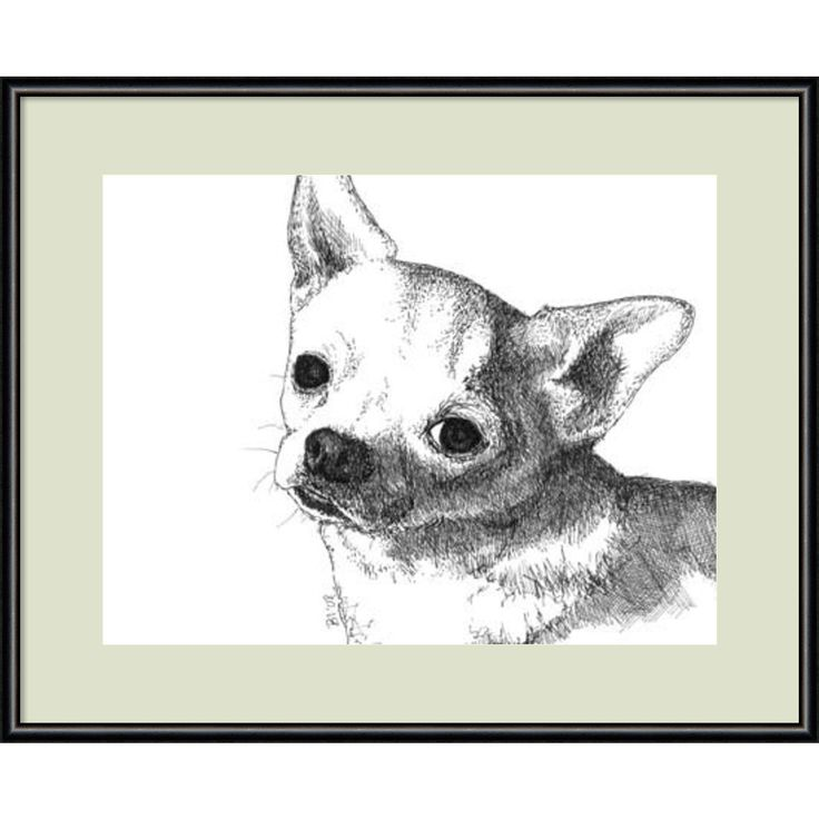 Framed Art Print 'Bruiser the Chihuahua Dog' by Beth Thomas 13 x 11-inch