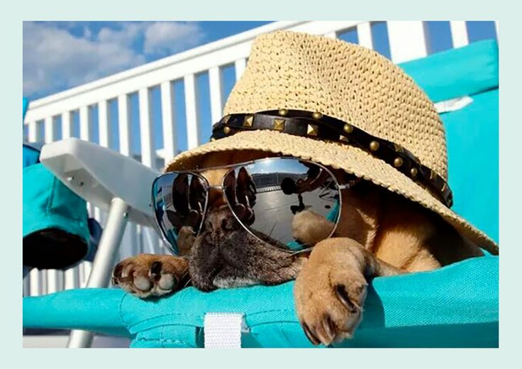Yummy recipes to keep your dog cool during Summer – Everything the Dog