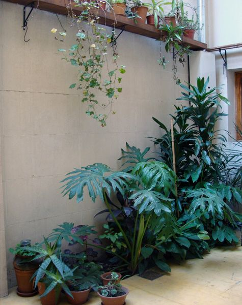 The 25 best estante para plantas ideas on pinterest - Estantes para plantas ...