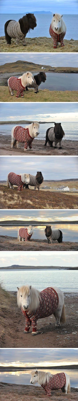 Ponies wearing cardigans