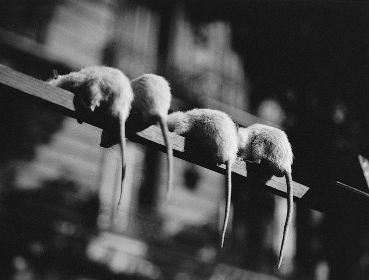 Ли Миллер (Lee Miller)   96 фотографий