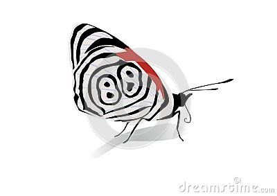 Vector Illustration of striped butterfly.