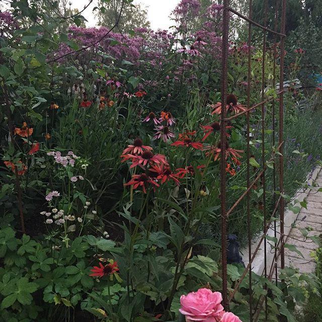 Trädgården verkar inne i andra andningen, mycket blommar om och mycket knopp i dahlior och rosor