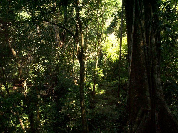 Selva_Lacandona.JPG (2304×1728)