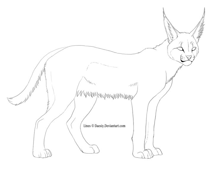 caracal coloring pages caracal colouring pages  page 2  kyle  39 s animal board pinterest Big Cat Coloring Pages  Caracal Coloring Page