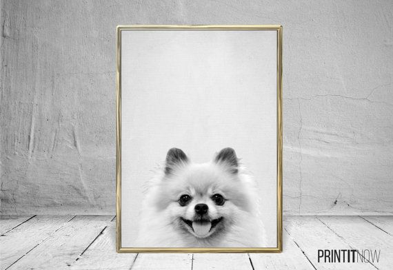Pomeranian Spitz Dog Print Nursery Animal Decor Wall Art Large Printable Poster Digital Download Modern Decor Black And White Animal Decor Dog Print Teddy Dog