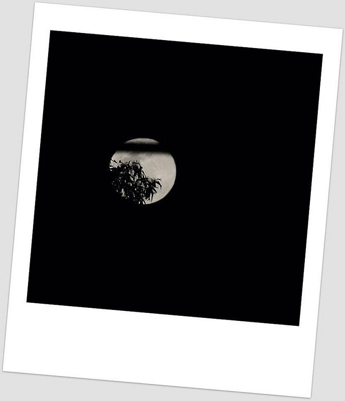 Have you seen the moon tonight?