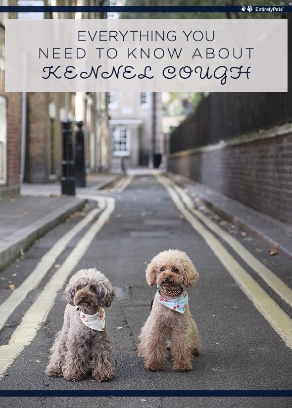 Everything You Need To Know About Kennel Cough Puppies Cute