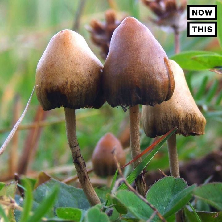 Shrooms might be safer than weed #love #hrblife #highlife #vape #vaporizers
