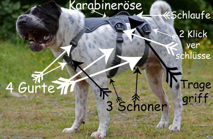 Geschirr Webmaster Bild angezogen an Harness Ruffwear grau ausbruchssicher Test Produkttest Hund Hunde Hundeblog Malous mannigfaltige Welt MMW Rabaukenbande Shar Pei Erklaerung Blog Hundegeschirr