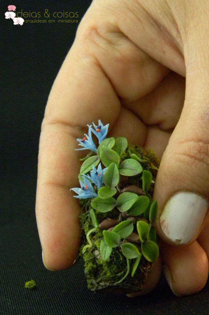 Dendrobium delicatulum - Google keresés