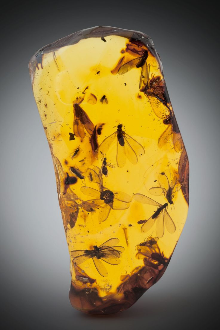 Amber with winged termite and winged ant inclusions (Hymenaea protera, Miocene) - Dominican Republic