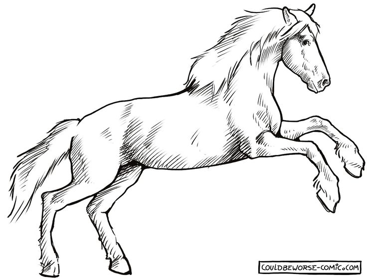 Horse side, rearing.  line drawing.