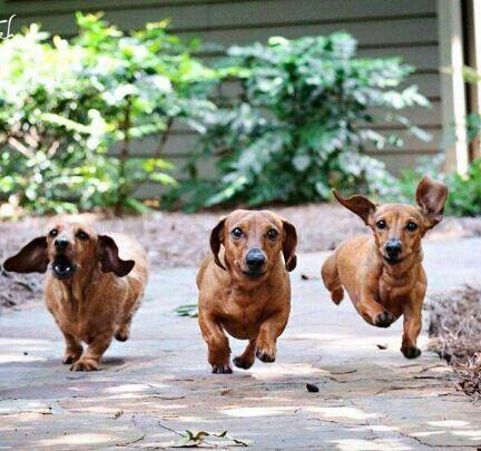 Run..hurry!!!!
