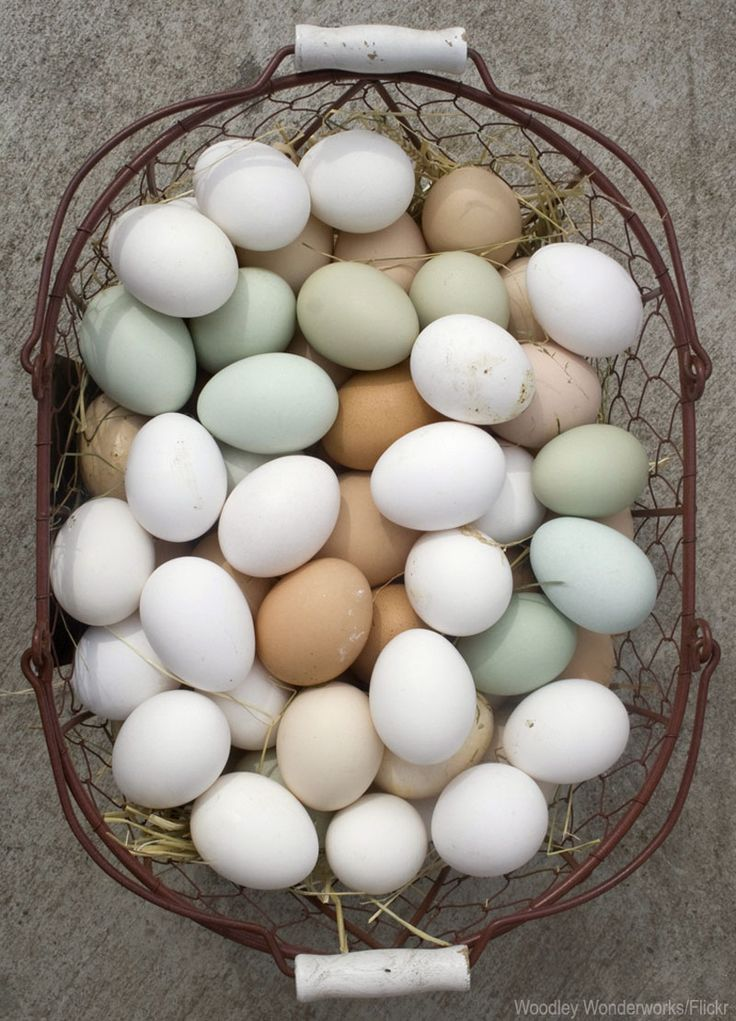 7 Chickens to Raise for Colorful Eggs - Photo courtesy Woodley Wonderworks/Flickr (HobbyFarms.com)