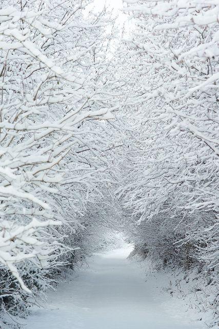 Winter                                                                                                                                                                                 More                                                                                                                                                                                 More