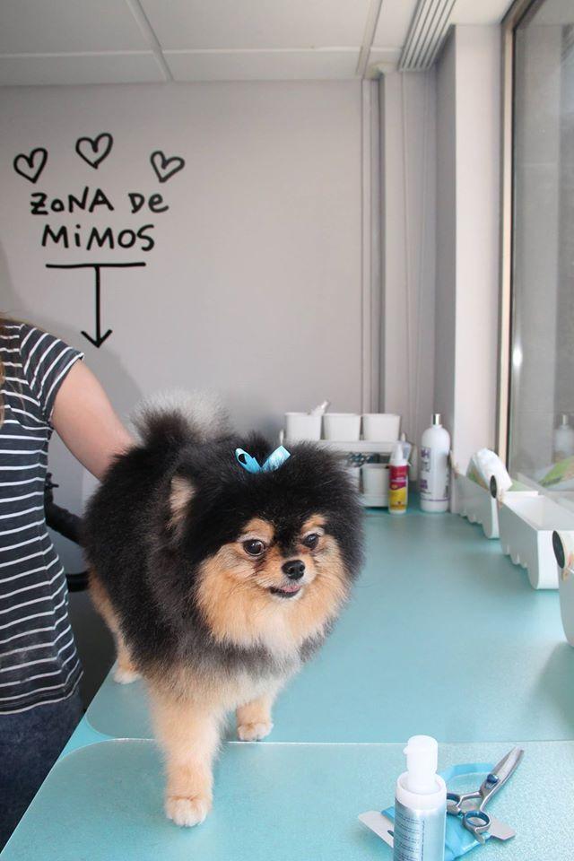 Pepe, recién salido de la Peluquería :)