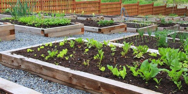 How To Make a Self-Watering Vegie Bed