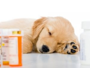 Flea powder probably isn't something you think often about. But with some frighteningly toxic ingredients you should: they can be deadly for you and your pets.
