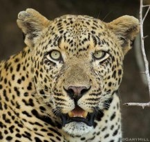 Portrait of the Airstrip Male - Gary Hill