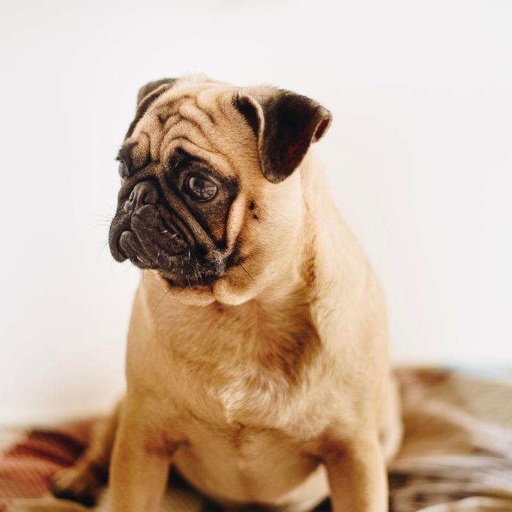 Create A Budget By Asking Yourself Three Questions Pug Puppies