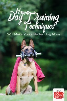 Want Gentle Dog Training Training Your Dog Doesn T Mean You Have