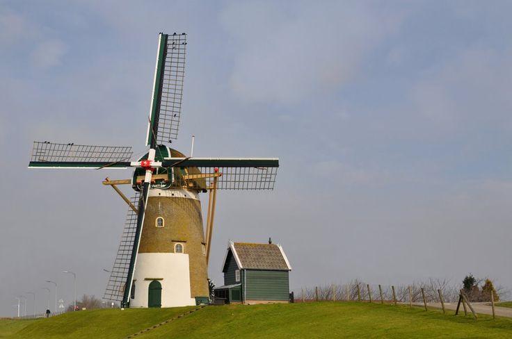 """""""The Swaen"""", Windmill of Nieuw-Beijerland"""