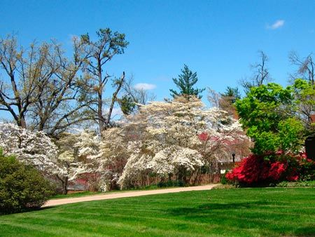 The Dogwood Trail in Paducah Ky. usually peaks around April 15th.  This is usually around the time Paducah is host to the annual Quilt Show.