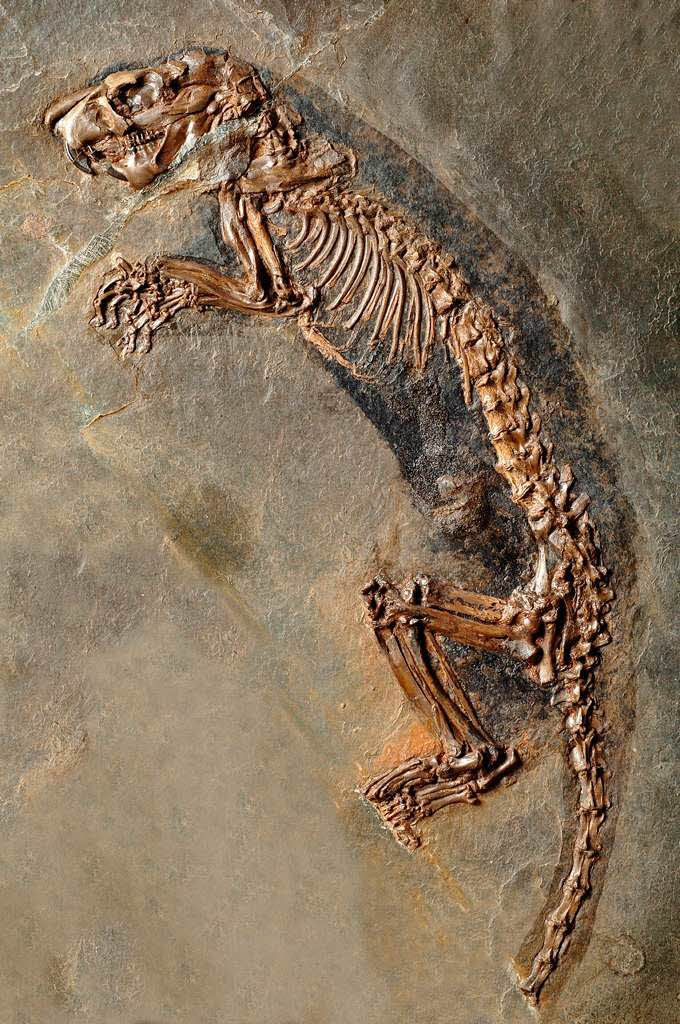 Bildung & Wissen: Fotos: Fossilien aus Messel in Basel - Fotogalerien - badische-zeitung.de