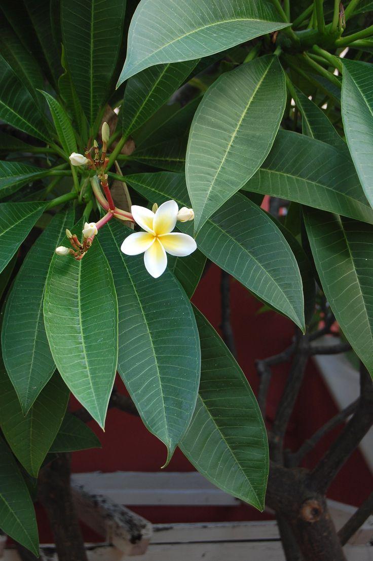 Flower in Crete
