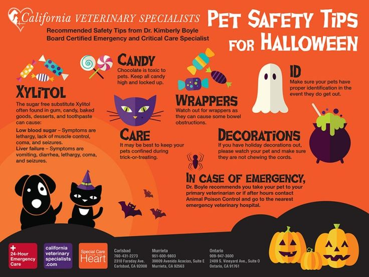 Toxic Trick Or Treat Pet Safety Tips For Halloween Pet Safety Halloween Pet Safety Halloween Animals