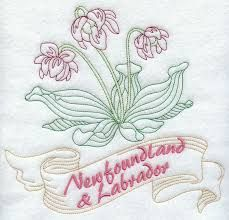 Image result for newfoundland quilt pictures