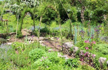 Man kann die aromatischsten Kräuter nicht nebeneinander pflanzen, wenn es der Nachbarpflanze nicht gefällt. Simple Regeln bereichern die Ernte.