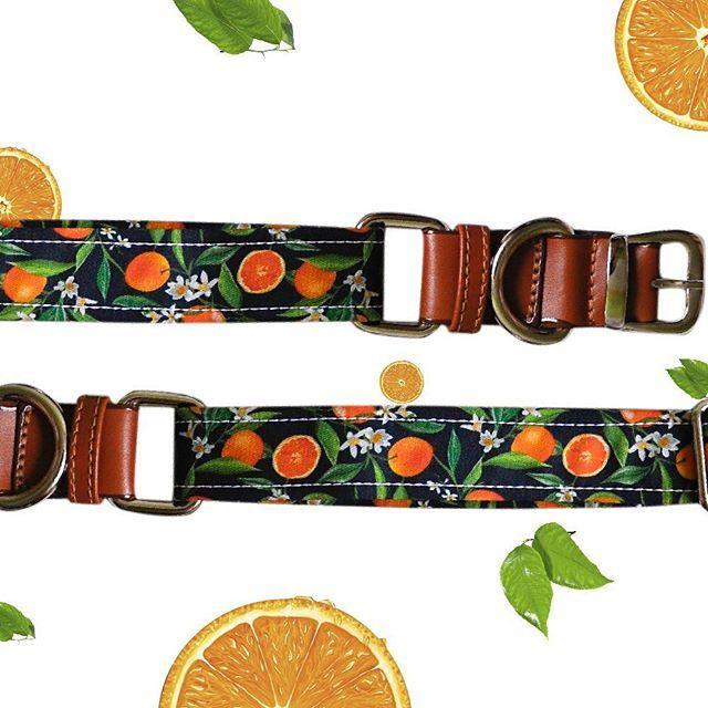 Nuestro collar de naranjas disponible en @laemergentecol ❤️ #CompraColombiano #DesignersColombia #Design #CollarDog #Doglovers #Catlovers #Gatos #Perros #AccesoriosMascotas #Petlovers #Tattoo #TattooLovers #Tatuajes #Colombia