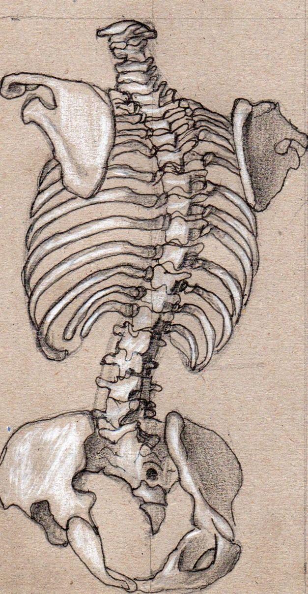 anatomy - How to Art   References   Pinterest   Anatomía, Anatomía ...