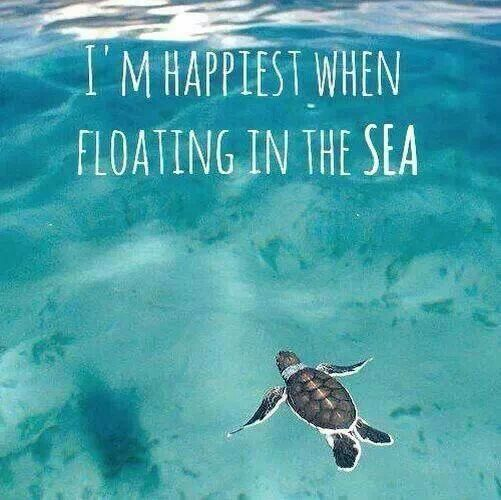 I'm happiest when I'm floating in the sea! That actually kind of looks like me when I'm floating in the sea! :) round body and little short arms and legs!!