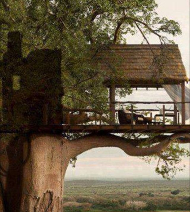 Tree house / The Green Life