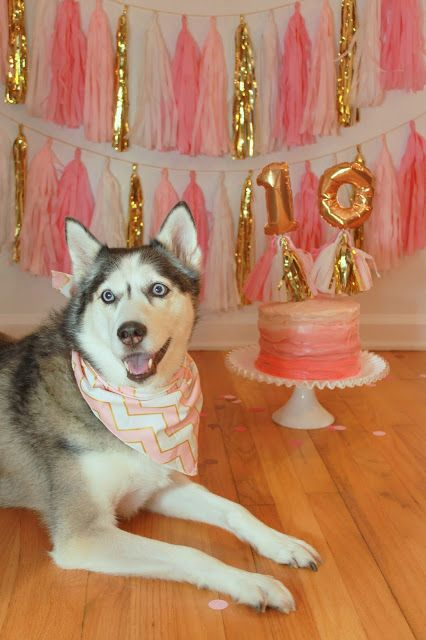 162 Best Images About Group Board Birthday Dogs On