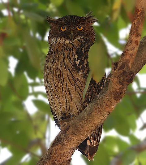 56 best tree stump carving images on pinterest owls for Do owls eat fish