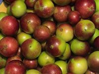 Camu-Camu:   A native of Peru, Camu-camu, or Myciaria dubia, is a purple-skinned fruit with a diverse nutritional profile. It is essentially unknown in the United States, but is held in high esteem in Japan. The Japanese believe it improves mood, fights depression and increases energy levels.    Potassium  Flavonoids  C Vitamins  Amino Acids  It can help with:    Immune Disfunction  Mood disorders  Viral Infection  Bacterial Function  In 2005, researchers in Brazil discovered t ...