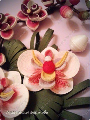Всем доброго времени. У меня снова орхидеи - мне очень нравятс эти цветы. Орхидея один из самых древних цветков на Земле, и на сегодняшний день насчитывается более 200 000 видов, или, скорее, гибридов этих прекрасных цветов. Каждый сорт особенный - многообразие цветов и оттенков, формы лепестков, центральная сердцевина и тычинки цветов - огромный простор для творчества и фантазии. У меня получились вот такие. Фотографии в этот раз снимала не на телефон, а с помощью видео камеры, в режиме…