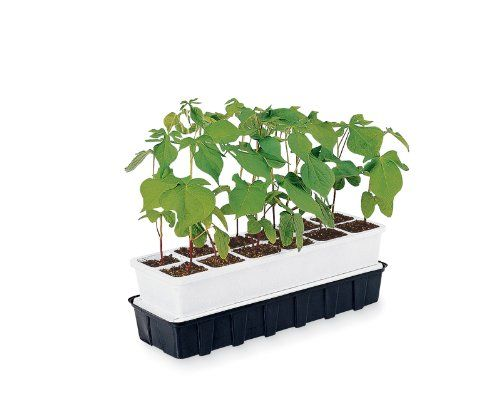 APS 12, Set of 2. All-in-one seedstarting system offers self-watering convenience. This slim, all-in-one seed starting unit fits on a windowsill and ensures a steady supply of water for seedlings. Replacement Parts are also available. The capillary matting and reservoir let seedlings help themselves to water as they need it, even if you're away. The APS 12 ensures sturdy, healthy transplants that will thrive in your garden. Seedlings pop right out of the tray for planting, which...