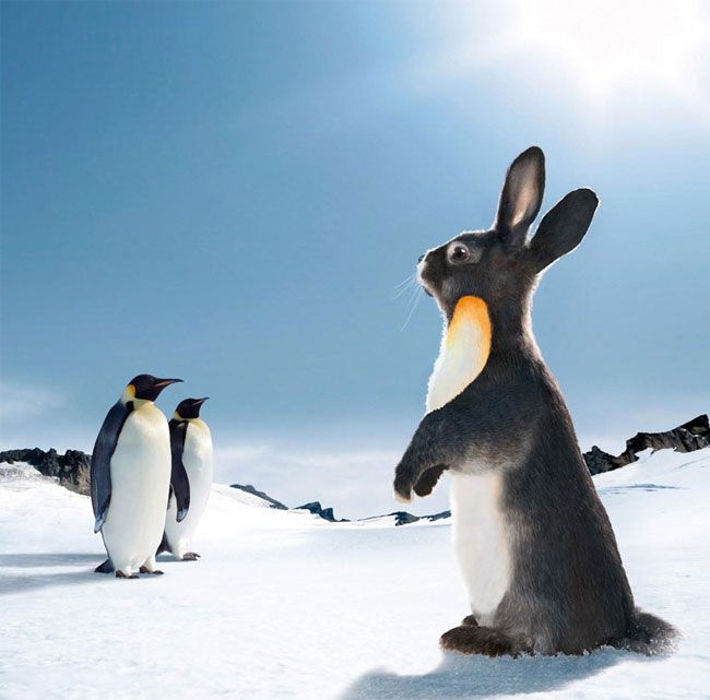 Okay, so I'm a sucker for stupid photoshopped things and this rabbit made to look like a penguin fits the stupidily funny so here you go...