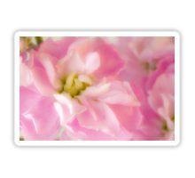 Sticker - #pinkstock #pinkstockmatthiola #pinkstockmacro #macro #pinkflowermacro #sandrafoster #sandrafosterredbubble