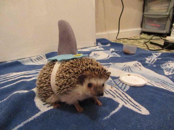 Hedgehog / Guinea pig Shark costume by ChubbyHedgehog on Etsy ... this makes me way too happy!