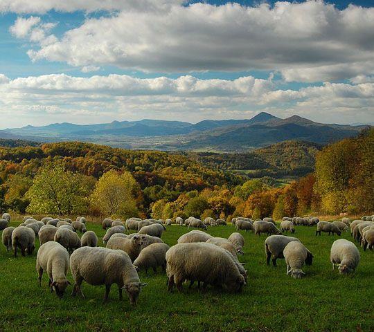 Pastures of Bohemian Middlelands (North Bohemia), Czechia