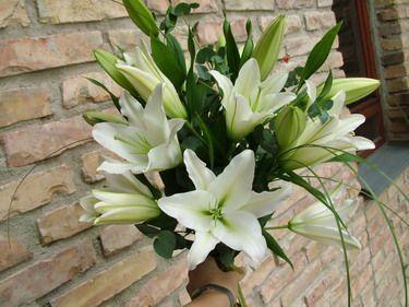 10 szál fehér oriental liliom