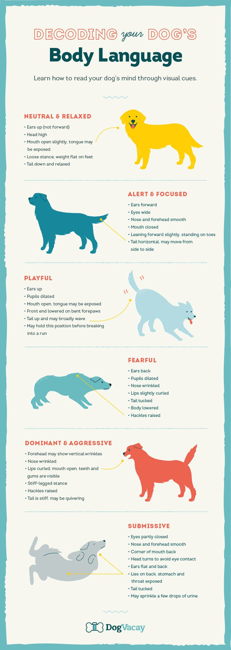 Learn how to read your dog's mind through visual cues and use your knowledge wisely to avoid high-risk situations.